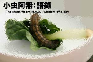 Wisdom of a day